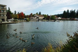 view of Lake Oswego with ducks